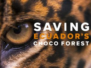 Saving Ecuador's Chocó Forest