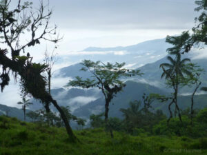 A view of the Buenaventura cloud forest ©Claudia Hermes