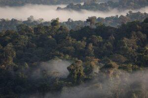 Aerial view of Ecuador's Chocó Forest