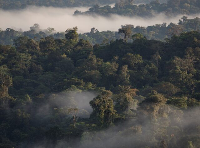 Aerial view of Ecuador's Chocó Forest