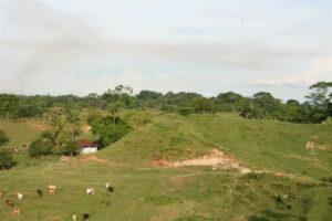 An area of El Silencio prior to reforestation ©Fundacion Biodiversida Colombia
