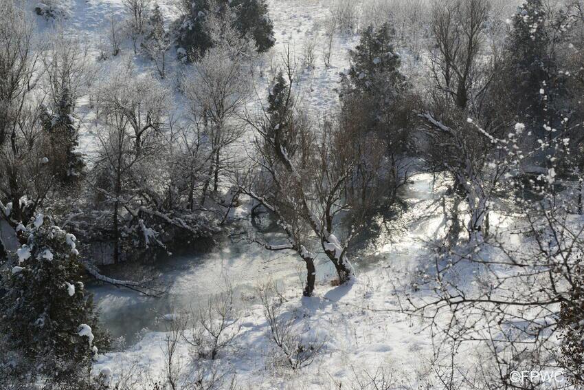 Caucasus Forest ©FPWC