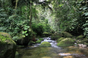 REGUA'S Atlantic Forest reserve in Brazilåç