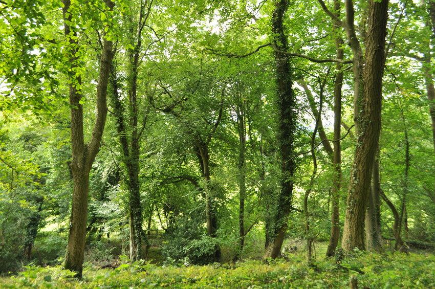 Woodland at Kites Hill