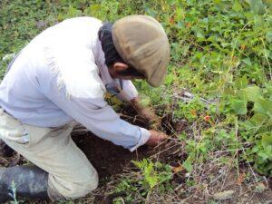 planting a tree, Guatemala