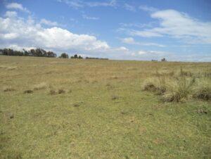 Leleshwa tussock grasslands