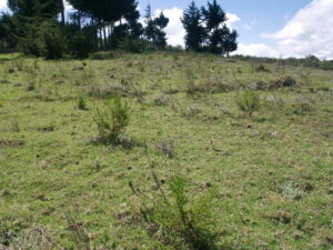 Kikuyu Escarpment reforestation site