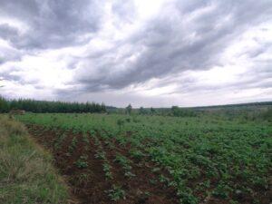 Reforestation project, Mount Kenya