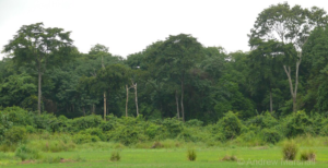 A view of Magombera Reserve