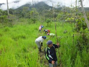 Tree planting at Nangaritza