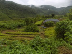 Agricultural plots in the mountains