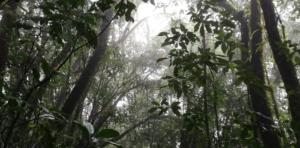 Forest, Yal Unin