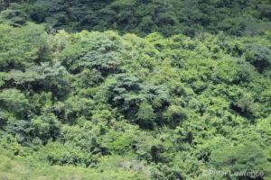 View of Tanzania coastal forest