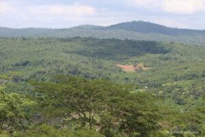 Coastal forest landscape, Tanzania
