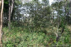 Forest landscape, Tanzania
