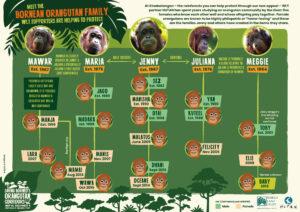 HUTAN Orangutan family tree