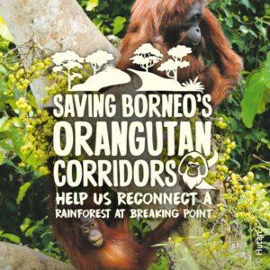 Saving Borneos Orangutans